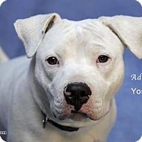 Adopt A Pet :: Yosemite - Acton, CA