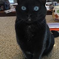 Adopt A Pet :: Blue Eyes - Nuevo, CA