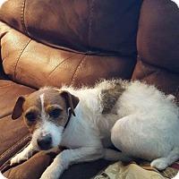Adopt A Pet :: Emma - Lacey, WA