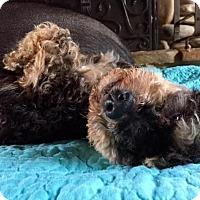 Adopt A Pet :: Quinn - Pittsburgh, PA