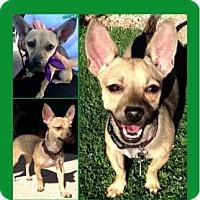 Adopt A Pet :: Babybel - Scottsdale, AZ