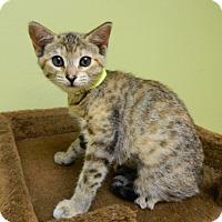 Adopt A Pet :: Mai Tai - The Colony, TX