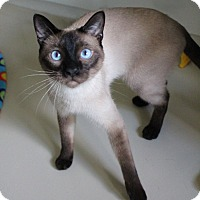 Adopt A Pet :: Marco: shy, sweet, see video - Studio City, CA