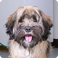 Adopt A Pet :: Ginger - Sudbury, MA