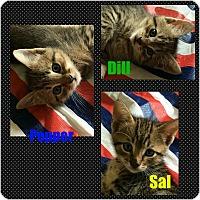 Adopt A Pet :: Kittens! (M) - bridgeport, CT
