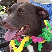 Adopt A Pet :: Xena - Evansville, IN