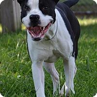 Adopt A Pet :: Skype - DuQuoin, IL