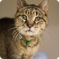 Adopt A Pet :: Cypress - Grayslake, IL
