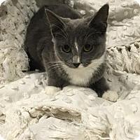 Adopt A Pet :: Regina - Paducah, KY