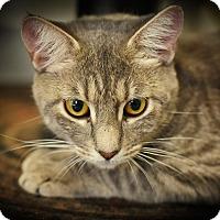 Adopt A Pet :: Jean Grey - St. Louis, MO