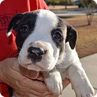 Adopt A Pet :: Amy-ADOPTED - CRANSTON, RI