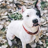 Adopt A Pet :: Phillip - Cleveland, OH