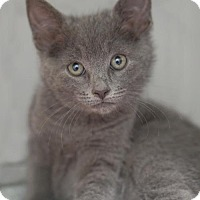 Adopt A Pet :: Ronan - Alameda, CA