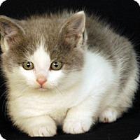 Adopt A Pet :: Harmony - Newland, NC