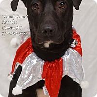 Adopt A Pet :: Candy Cane - Newnan City, GA