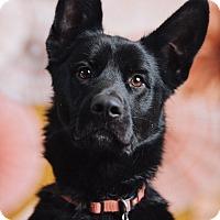 Adopt A Pet :: Tajin - Portland, OR
