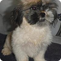 Adopt A Pet :: MING Adoption pending - Manchester, NH