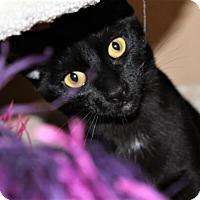 Adopt A Pet :: Bella - Encinitas, CA