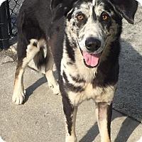 Adopt A Pet :: Robbie - Ocean Ridge, FL