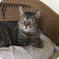 Adopt A Pet :: Marshall - Frankfort, IL