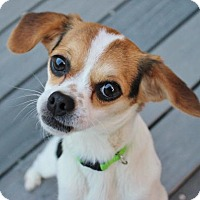 Adopt A Pet :: Beth - Atlanta, GA