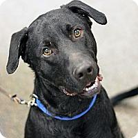 Adopt A Pet :: Deuce - Cheyenne, WY