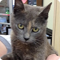 Adopt A Pet :: Kierra - Troy, OH
