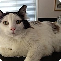 Adopt A Pet :: Moo Moo - Davis, CA