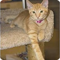 Adopt A Pet :: Gilda - New Port Richey, FL