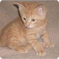 Adopt A Pet :: Bambi - Kirkwood, DE