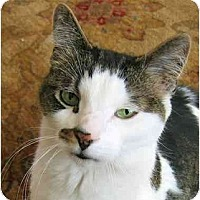 Adopt A Pet :: Snickers - Plainville, MA