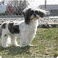 Adopt A Pet :: Suki - Meridian, ID