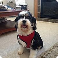 Adopt A Pet :: Pandora - Hilliard, OH