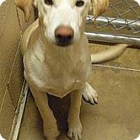 Adopt A Pet :: Charlie - Wickenburg, AZ