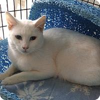 Adopt A Pet :: Gabriel - Victor, NY