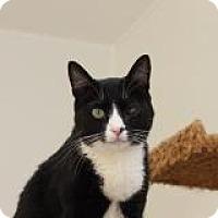 Adopt A Pet :: Bella - El Cajon, CA