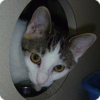 Adopt A Pet :: Tuffy - Hamburg, NY