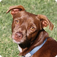 Adopt A Pet :: Mickey - Edmonton, AB