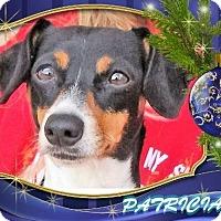 Adopt A Pet :: PATRICIA - Red Bluff, CA