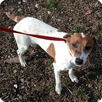 Adopt A Pet :: Jo Jo - Allentown, PA