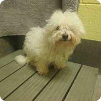 Adopt A Pet :: ROCSI - Upper Marlboro, MD