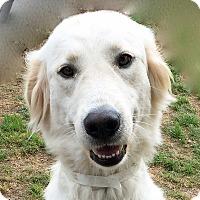 Adopt A Pet :: Cindy - BIRMINGHAM, AL