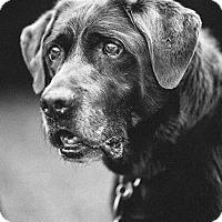 Adopt A Pet :: Nerf - Portland, OR