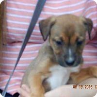 Adopt A Pet :: Lakota (5 lb) Video! - SUSSEX, NJ