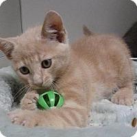 Adopt A Pet :: Hadley - Massapequa, NY