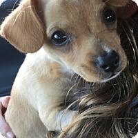 Adopt A Pet :: Camino - San Diego, CA