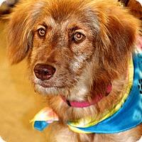 Adopt A Pet :: Luna - Albemarle, NC