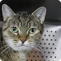 Adopt A Pet :: Chirpa - Sarasota, FL