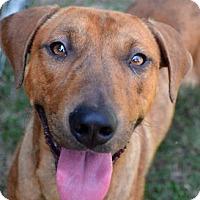 Adopt A Pet :: Jeb - Ridgeland, SC