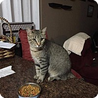 Adopt A Pet :: Khole - Evansville, IN